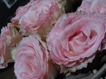 Rosen-Rose