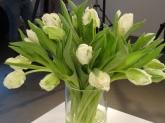Tulpen-weiß