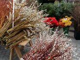 Viktualienmarkt-Palmkätzchen